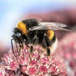 Naturschutz und Biodiversität Zusätzlicher natürlicher Lebensraum